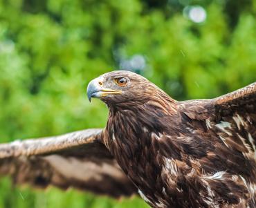Impressive hawk
