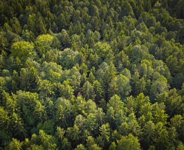 Overhead view of a forest