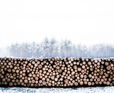 Large pile of timber logs perfectly stacked