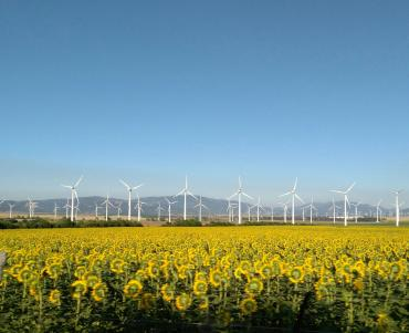 Windfarms in the distance - with dandelions in the foreground
