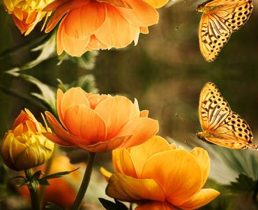 orange butterfly approaching an orange flower