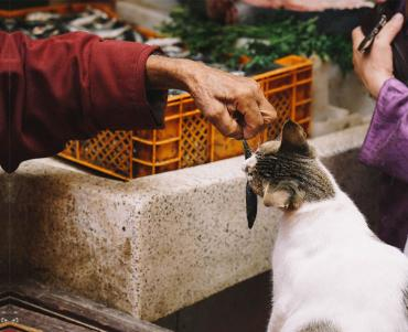 Cat being fed a fish