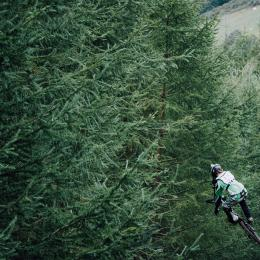 Cyclist flying into oncoming trees
